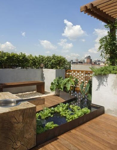 Garden design on the roof with a pool and aquatic plants