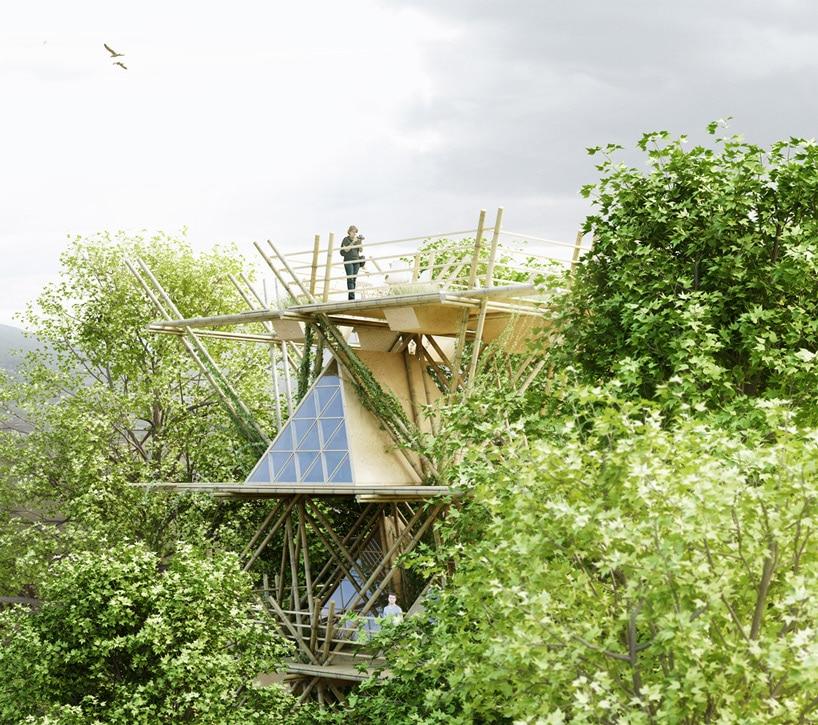 Bamb construye hogar - Construye hogar ...